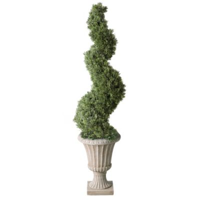 "36"" Cedar Corkscrew Topiary"