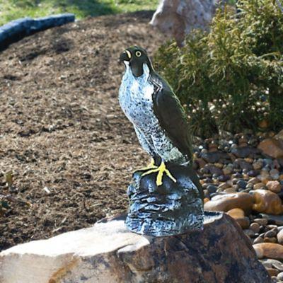 Peregrine Falcon Decoy Bird Repellent