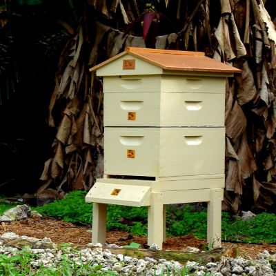 Honey Bee City Urban Beehive