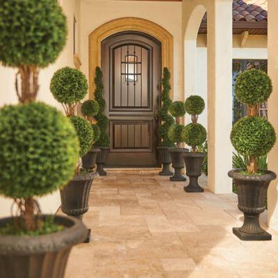 "36"" Podocarpus Double Ball Topiary"
