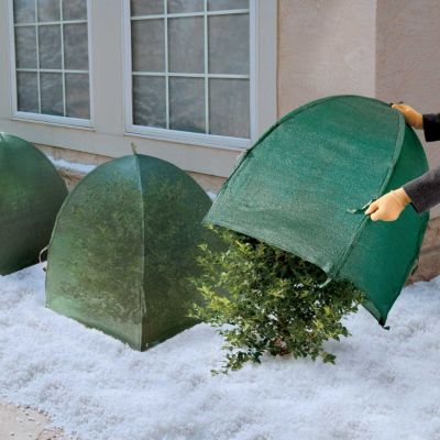 Winter Shrub Cover