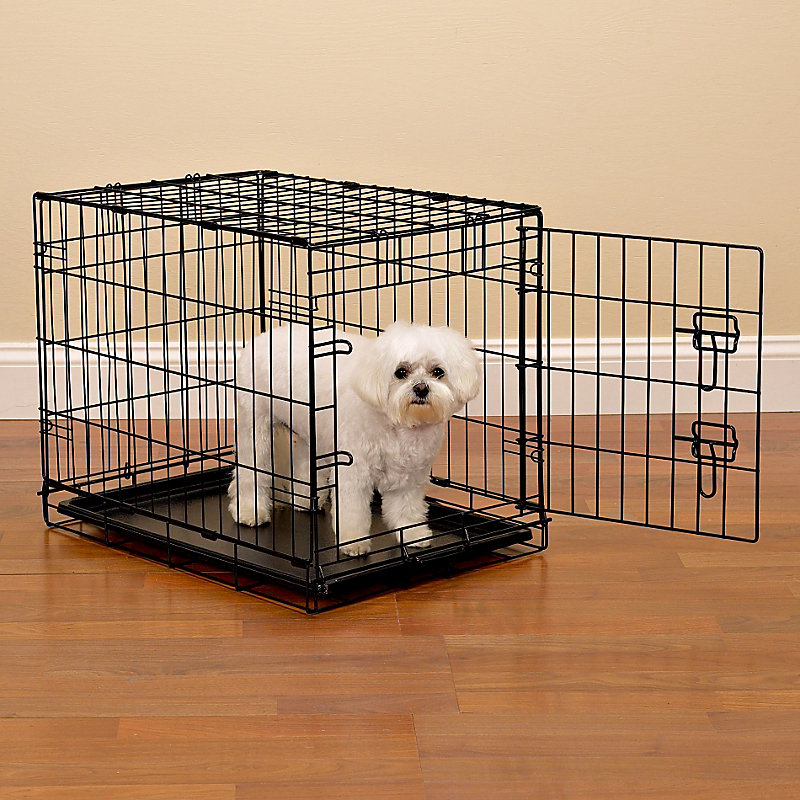 Why Is Crate Training Good For Your Dog