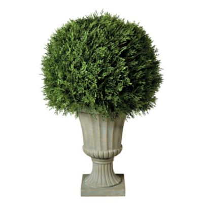 "20"" Cypress Ball Topiary"
