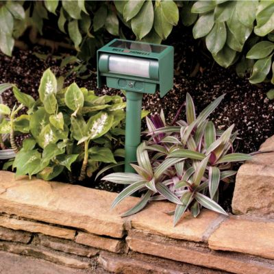 Solar Animal Repeller with Strobe Light