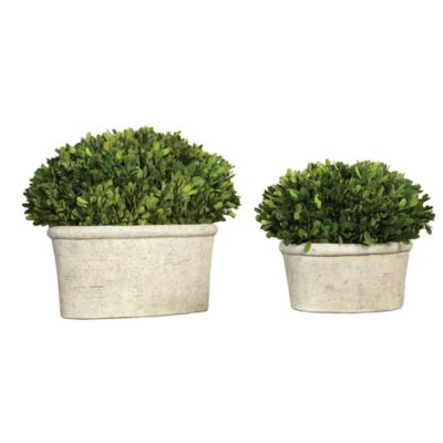 Preserved Boxwood Oval Dome Plants-Set of 2