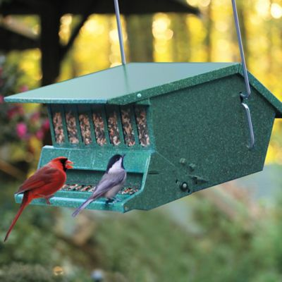 Birds Choice Squirrel Proof Bird Feeder