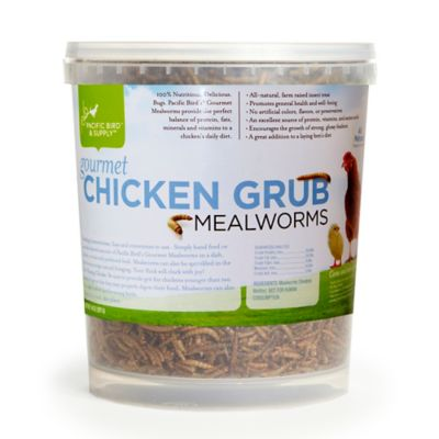 Gourmet Chicken Mealworm Grub Buckets